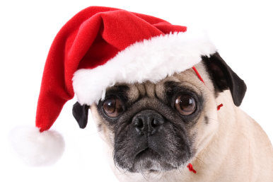 Book your furry friends to visit Father Christmas in Canterbury